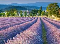 Provence - vůně levandule, turistické skvosty a přírodní par Dle programu