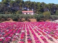 Provence májová na kole - Last Minute a dovolená