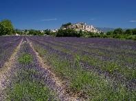 Provence s vůní levandulí Dle programu
