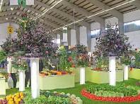 Tulln – Zahradní veletrh a návštěva zahradnictví Starkl - Je Dle programu