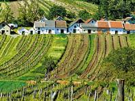 Weinparade v Poysdorfu - autobusem