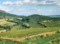 Čechy a Sasko - cesta za evropským vinařstvím - zájezdy