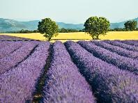 Provence - Poznávací zájezd do jižní Francie, příroda a pamá - poznávací zájezdy