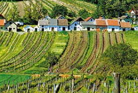 41. Weinparade v Poysdorfu