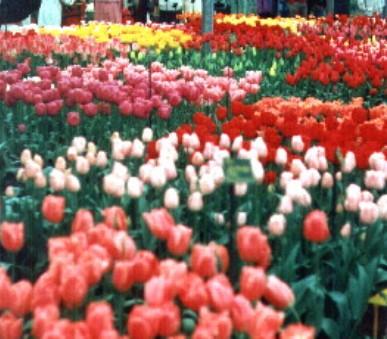 Květinové Holandsko a romantická Belgie