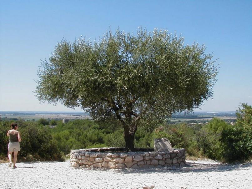Barvy Provence (fotografie 20)