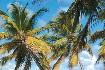 Hotel Le Cap Est Lagoon Resort and Spa (fotografie 14)