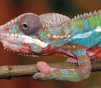 Madagaskar - Ostrov přírodních krás