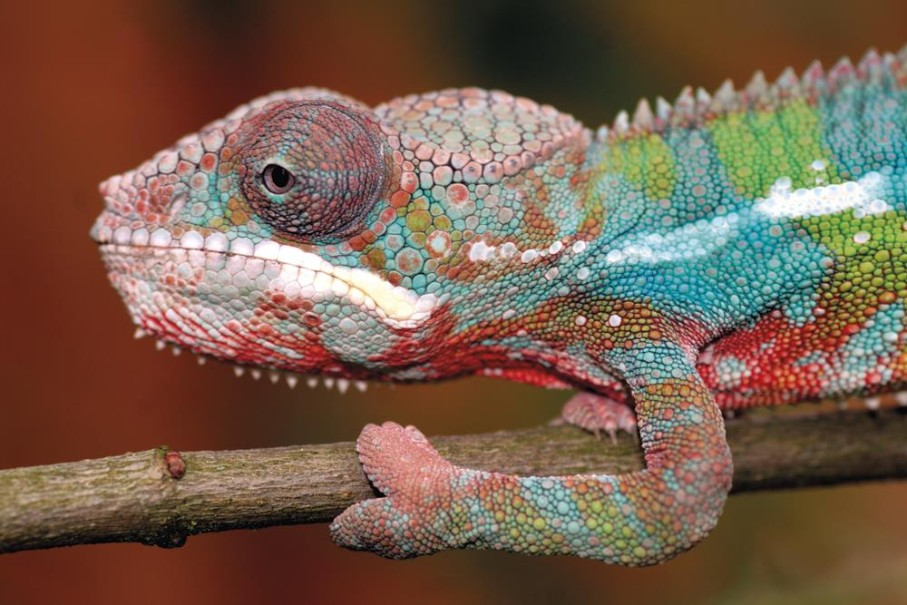 Madagaskar - Ostrov přírodních krás (fotografie 1)