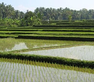 Bali a Lombok všemi smysly