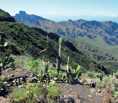 Tenerife s trekingem - turistika mezi sopkami a exotickými soutěskami