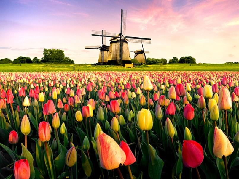 Benelux - Poznávací zájezd do Holandska, Belgie a Lucemburska - Historické klenoty zemí Beneluxu (fotografie 1)