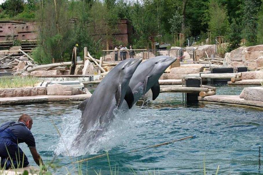 Delfinárium A Zoo V Norimberku (fotografie 12)