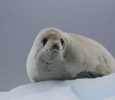 Klasická Antarktida