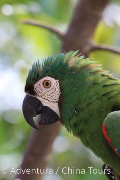 Ekvádor a Galapágy (fotografie 14)
