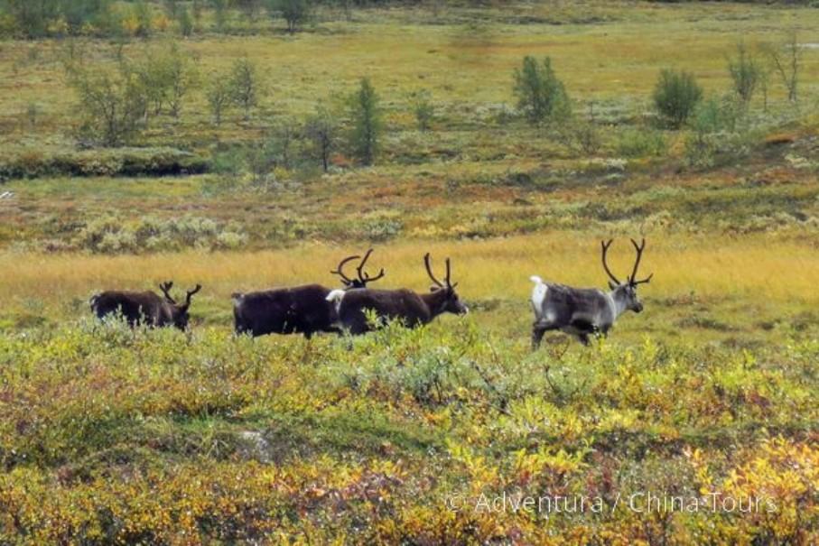Letní řeky Skandinávie (fotografie 2)