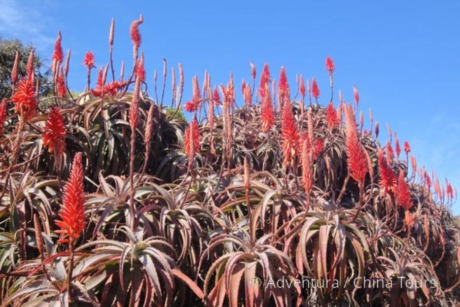 Turistika v jižní Africe – Dračí hory (fotografie 10)