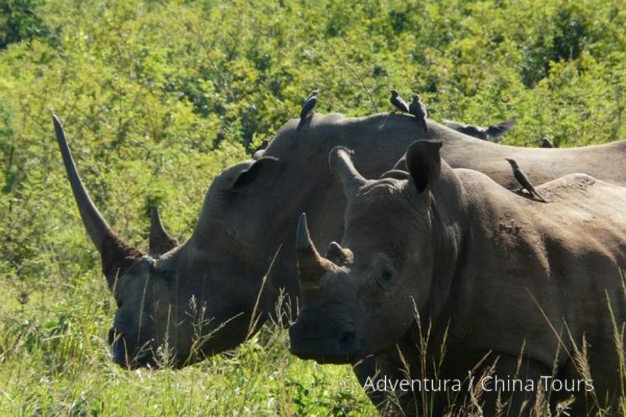 Turistika v jižní Africe – Dračí hory (fotografie 6)