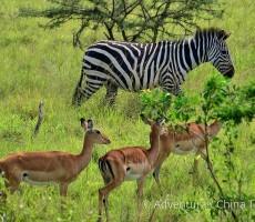 To nejlepší z Ugandy, Keni a Tanzanie