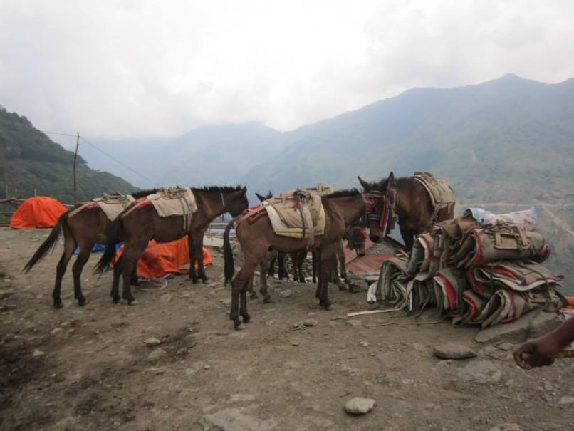 Nepál a trek v Himalájích (expedice) (fotografie 9)