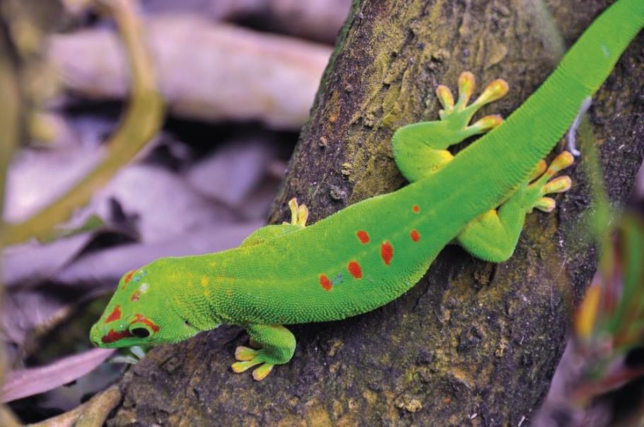 Madagaskar - Ostrov přírodních krás (fotografie 16)