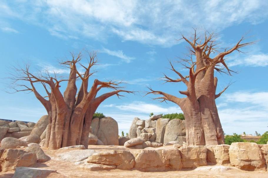 Madagaskar - Ostrov přírodních krás (fotografie 20)