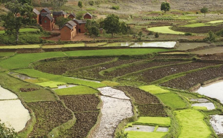 Madagaskar - Ostrov přírodních krás (fotografie 26)