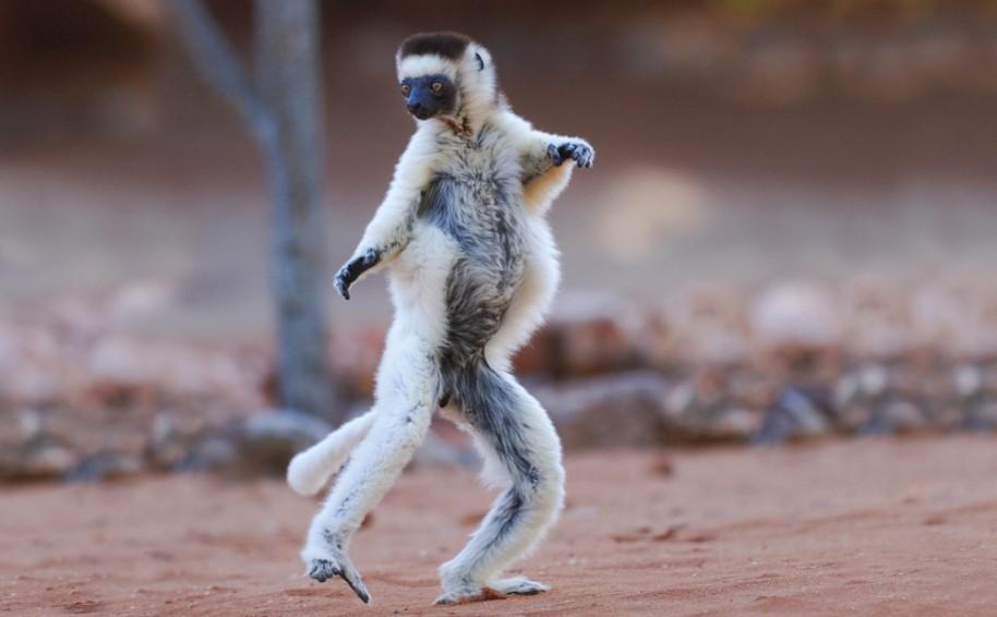Madagaskar - Ostrov přírodních krás (fotografie 28)