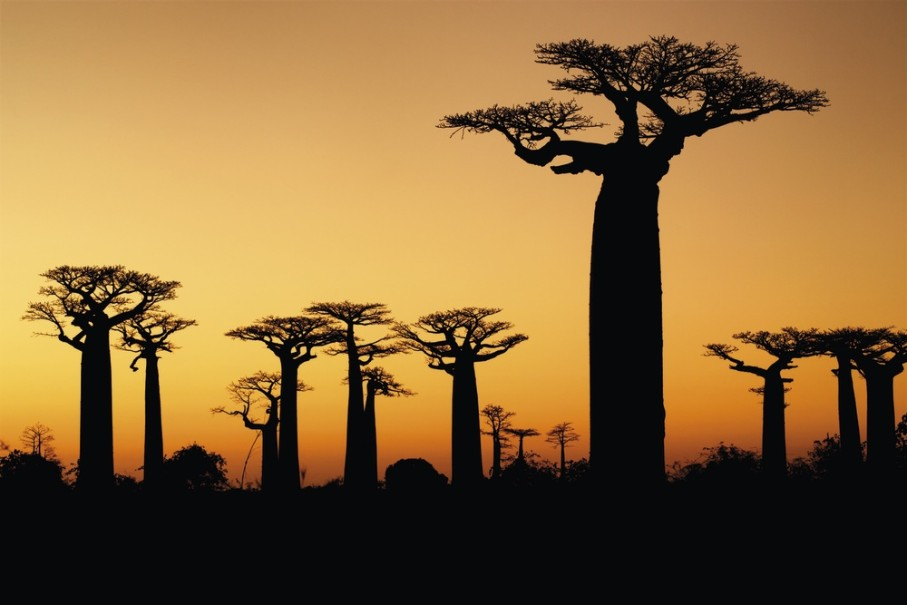 Madagaskar - Ostrov přírodních krás (fotografie 17)