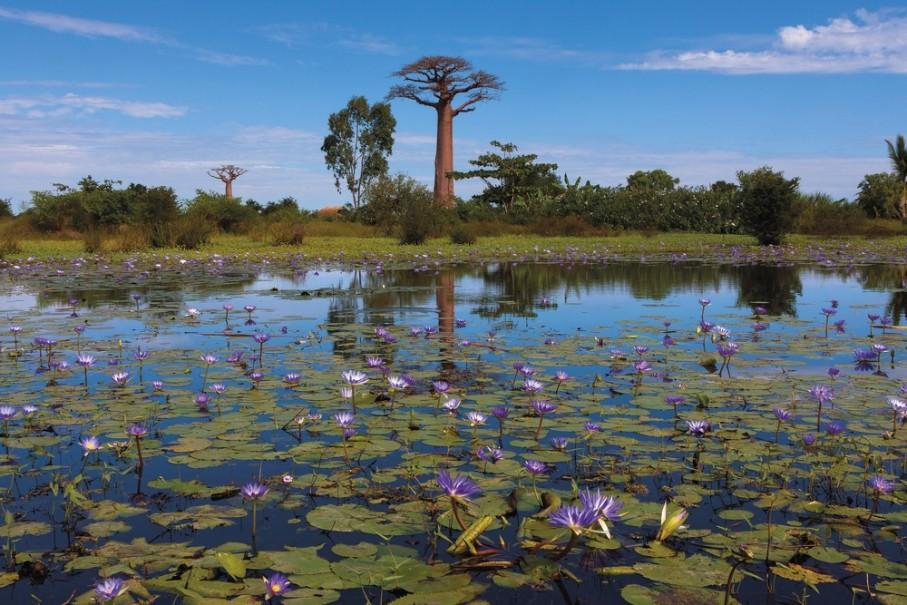 Madagaskar - Ostrov přírodních krás (fotografie 12)
