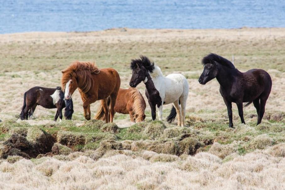 Islandská pohlednice - Letecké víkendy (fotografie 10)