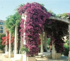 Divoká Korsika, perla Středomoří