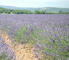 Provence a krásy Azurového pobřeží
