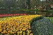 Květinový park Keukenhof s návštěvou Amsterdamu (fotografie 5)