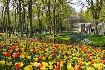 Květinový park Keukenhof s návštěvou Amsterdamu (fotografie 4)