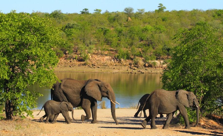 Sloni u napajedla v Keni