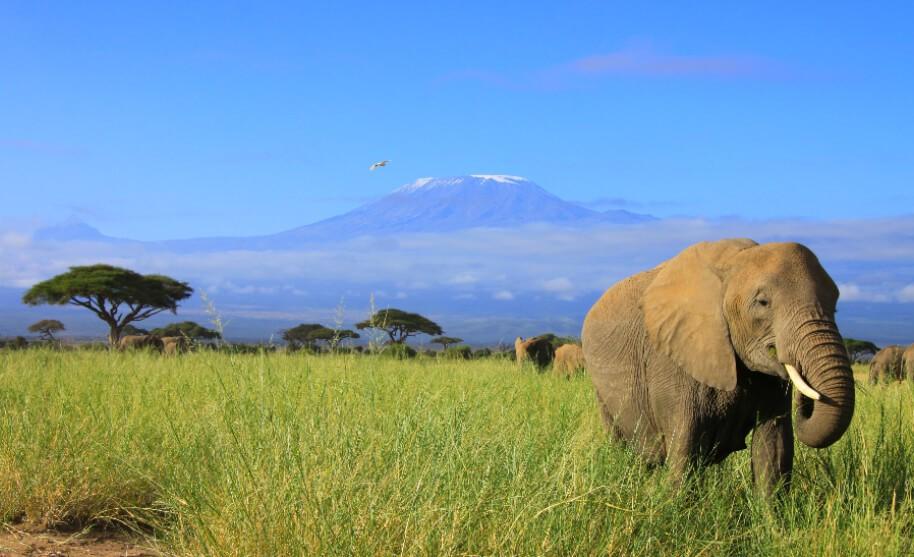 Sloni a Kilimanjaro v Keni