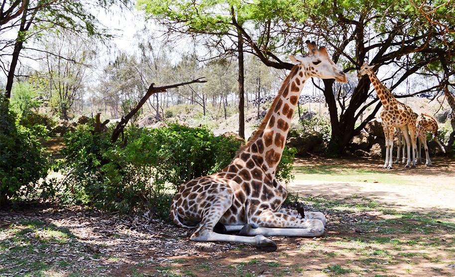 Příroda v Keni