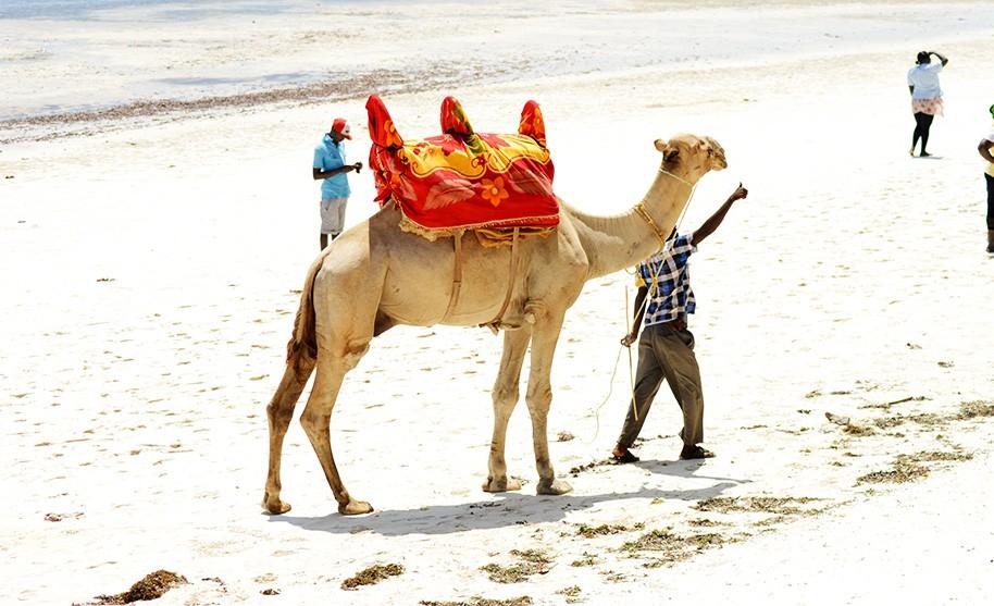 Pláž Bamburi v Keni