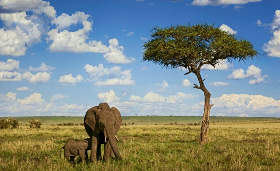 Pravé safari - sloni v Africe v Keni