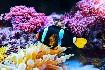 Podmořský svět při potápění v Keni v Africe