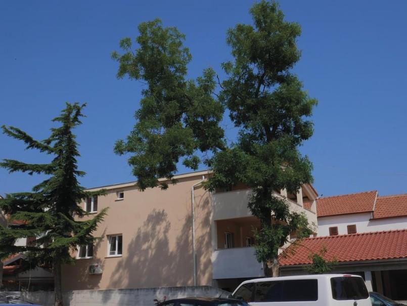 Apartmány Tamaris (fotografie 16)