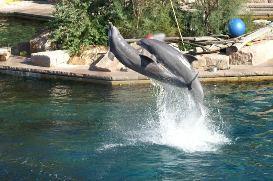 Delfinárium a zoo v Norimberku (fotografie 2)