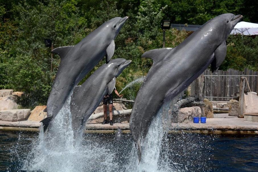 Delfinárium a zoo v Norimberku (fotografie 1)