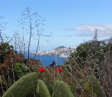 Madeira - květinová a turistická