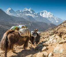 Trek do základního tábora Annapurny a divoká zvěř v NP Chitwan