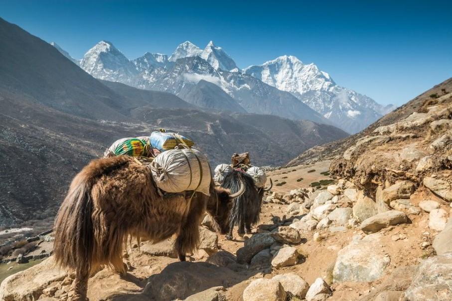 Trek do základního tábora Annapurny a divoká zvěř v NP Chitwan (fotografie 1)