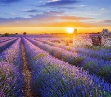 Provence s koupáním