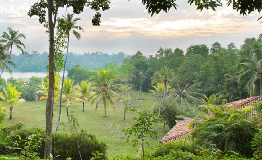 deštný prales na Srí Lance