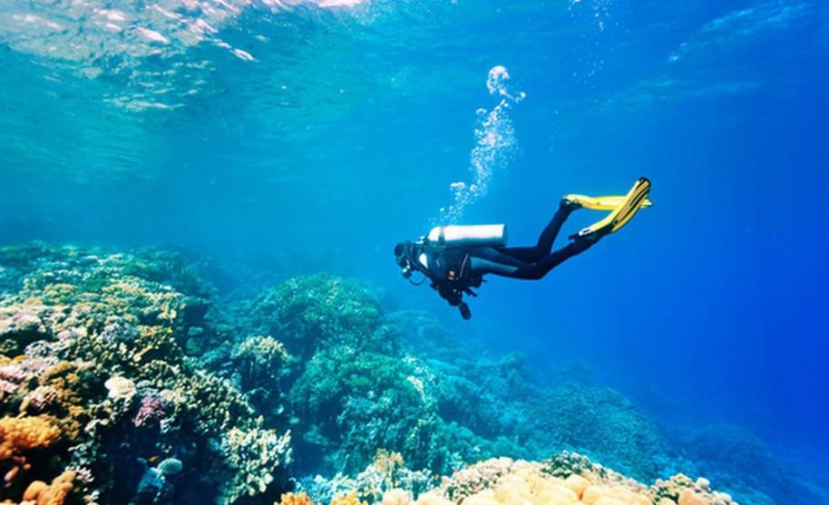 Potápění za krásami podmořského života